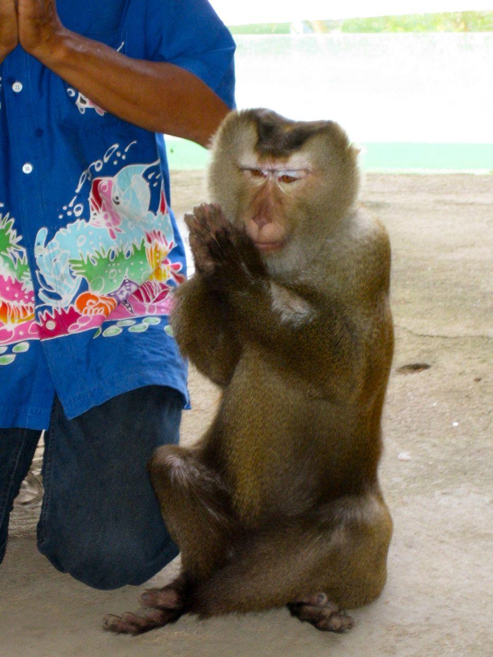 Monkey School Phuket