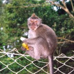 Reptilienzoo und Monkey Forest