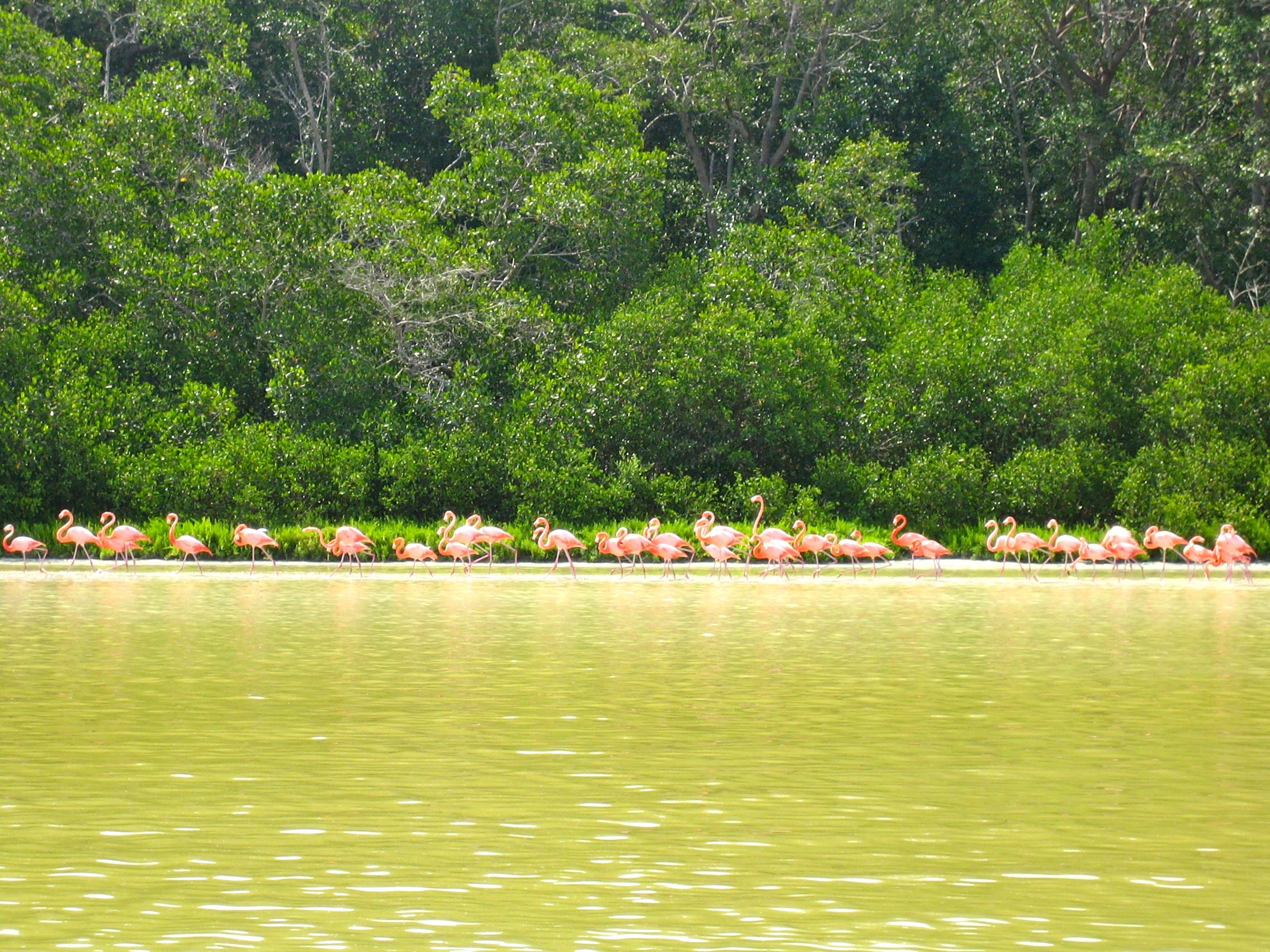 Biosphärenreservat Celestun und warum Flamingos rosa sind