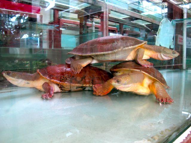 Die größte Schildkrötensammlung der Welt