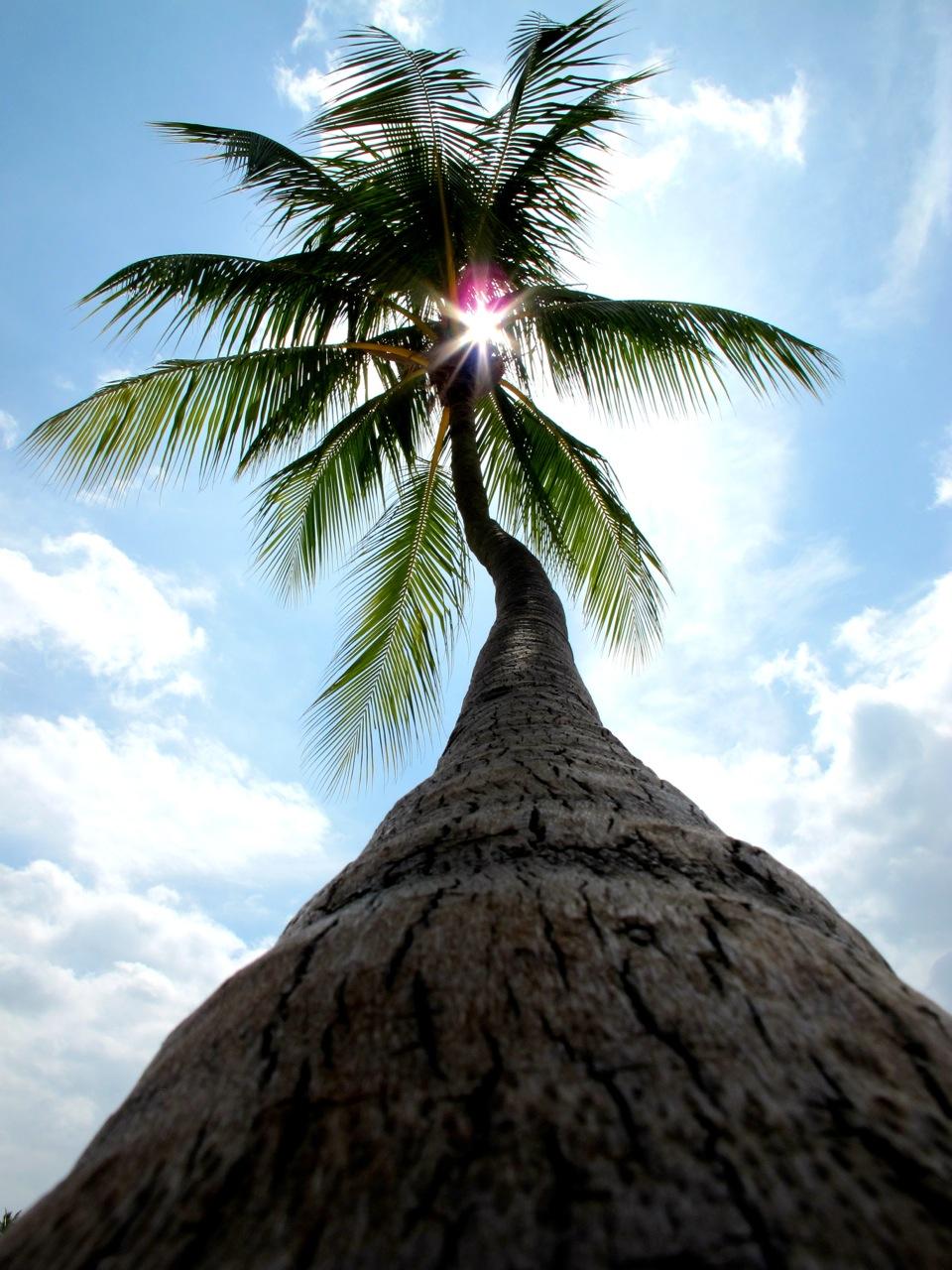 Weihnacht unter Palmen