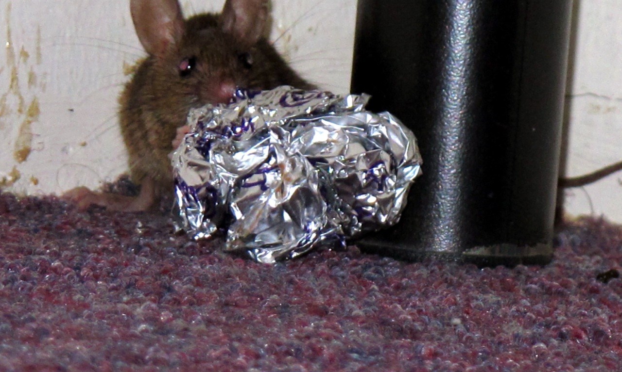 Mouse in Hostel