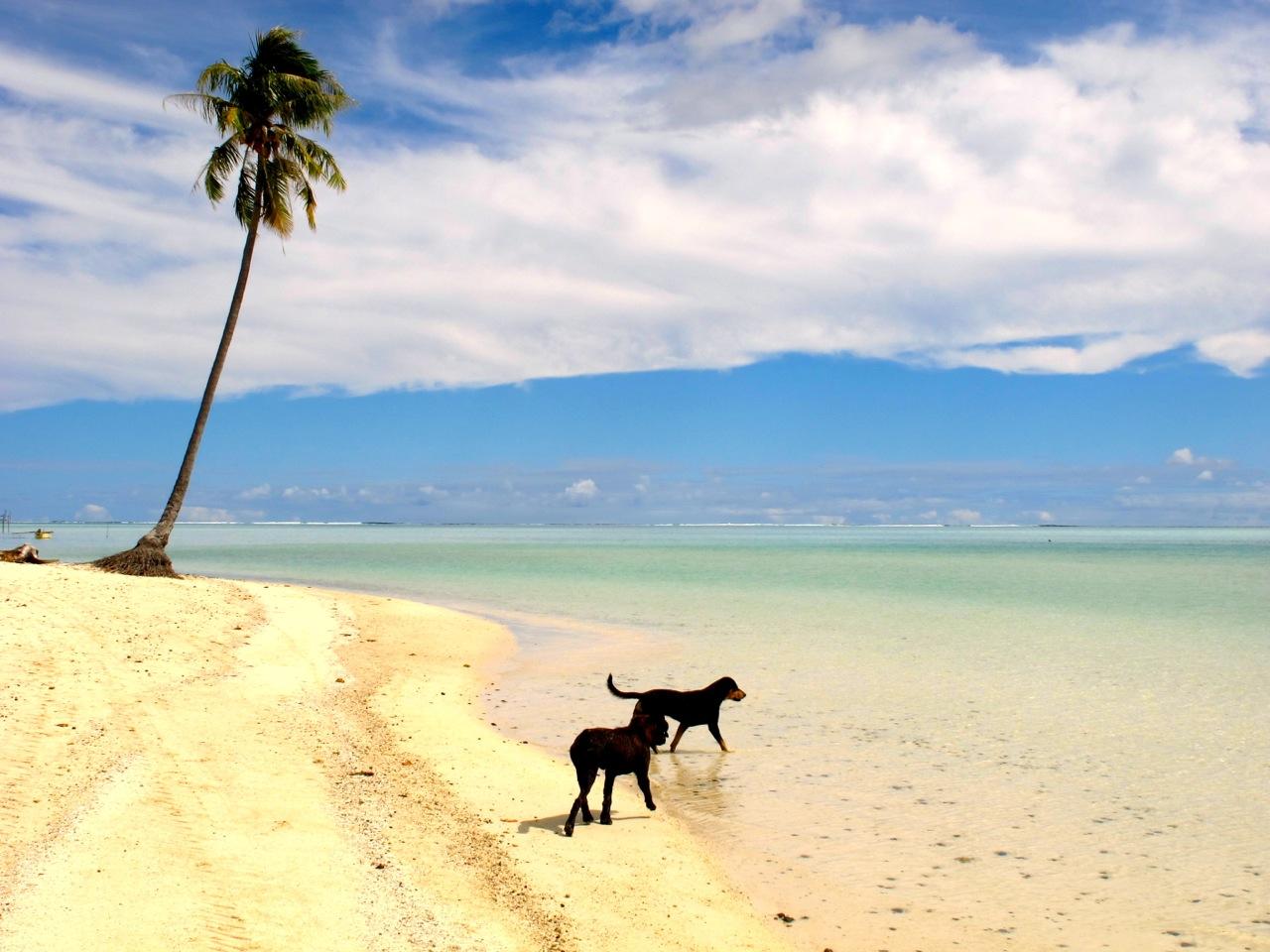 French Polynesia beaches