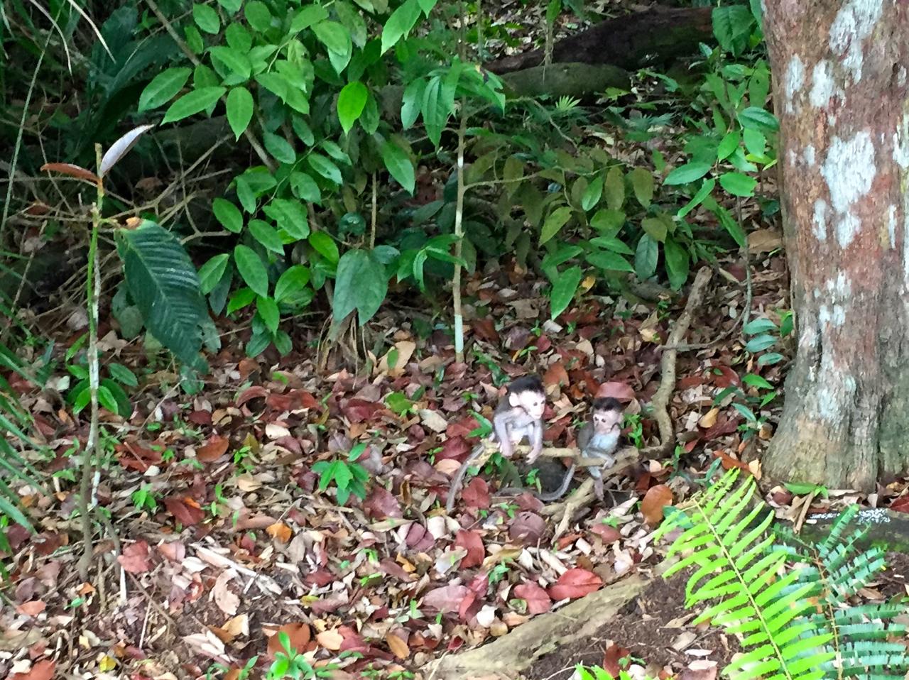 Affenbabies beim Spielen im Regenwald
